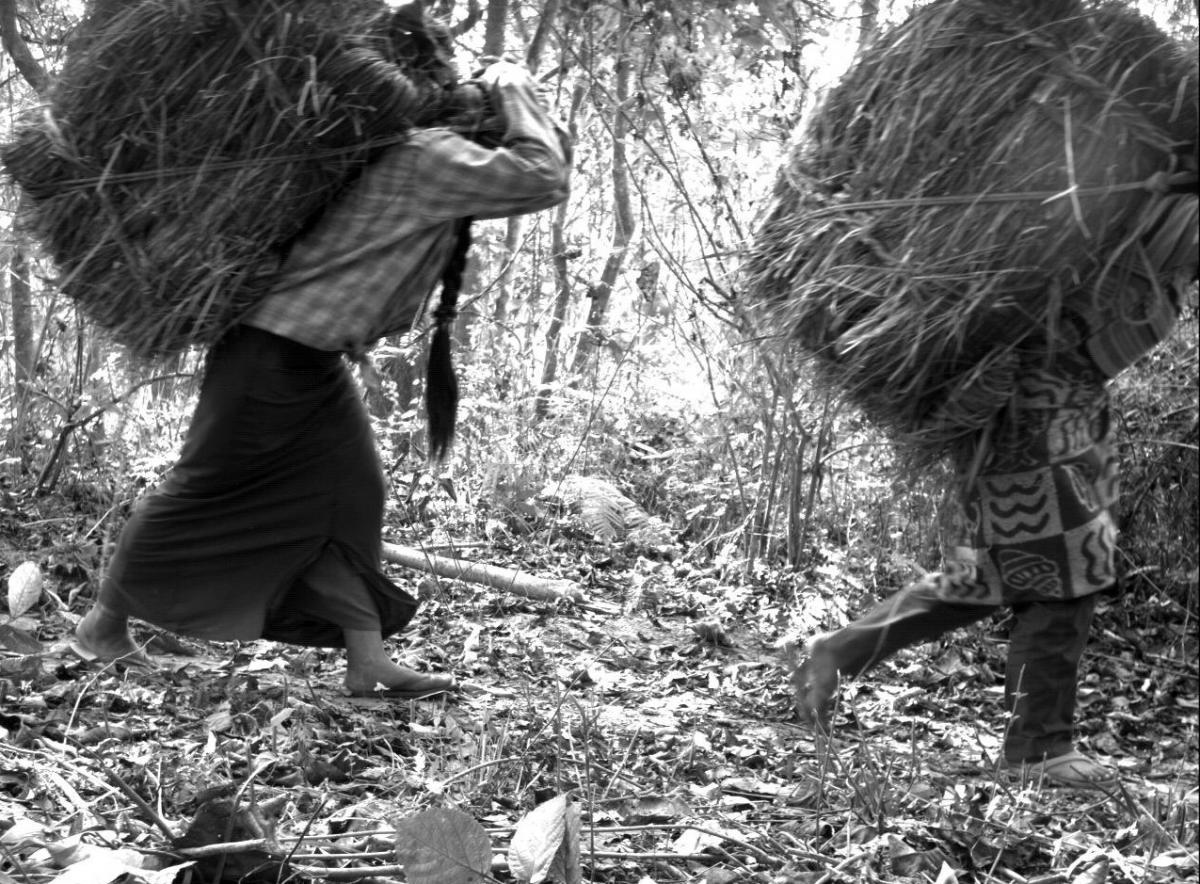 Women gathering grass in Chitwan