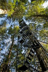 From this 71-foot eddy-flux tower in a 200-year-old hemlock forest, Harvard Forest scientists have measured carbon dynamics and other ecosystem processes for more than 20 years as part of the Long-Term Ecological Research program. Photo: David Foster