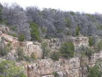Drought and beetle-killed piñon pines in Walnut Canyon National Monument near Flagstaff, Ariz., amid some surviving trees. Forest drought stress is highly correlated with mortality from poor growth, bark beetle outbreaks, and high-severity fire. Photo by: CHANS-Net member Craig D. Allen, USGS
