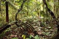 Protected areas successfully prevent deforestation in Amazon rainforest