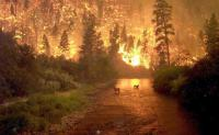U.S. Forest Service offers webinar on evaluating resilience in fire-prone ecosystems