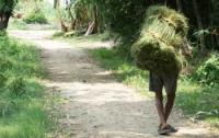 A man carries a bundle of grasses collected in a community forest in Chitwan, Nepal.  Photo by: Scott Yabiku, Arizona State University