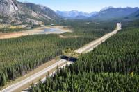 A wildlife overpass on the Trans-Canada Highway helps wildlife and vehicles avoid lethal connections in Banff National Park, British Columbia. The park is a leader in highway mitigation, part of a 30-year-old initiative that has installed 44 crossing structures.  Photo by: Adam Ford, Highwaywilding.org
